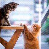 【2020年版】吉祥寺の猫カフェ全5店舗を徹底紹介【猫充実】