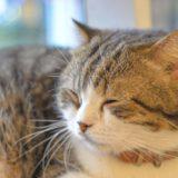 【2021年版】上野でおすすめの猫カフェ4選