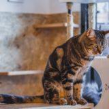 【2021年版】秋田県でおすすめの猫カフェ4選!【かわいい猫がたくさん!】