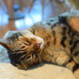 【2021年版】蒲田でおすすめの猫カフェ2選