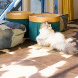 銀座でおすすめの猫カフェ2選