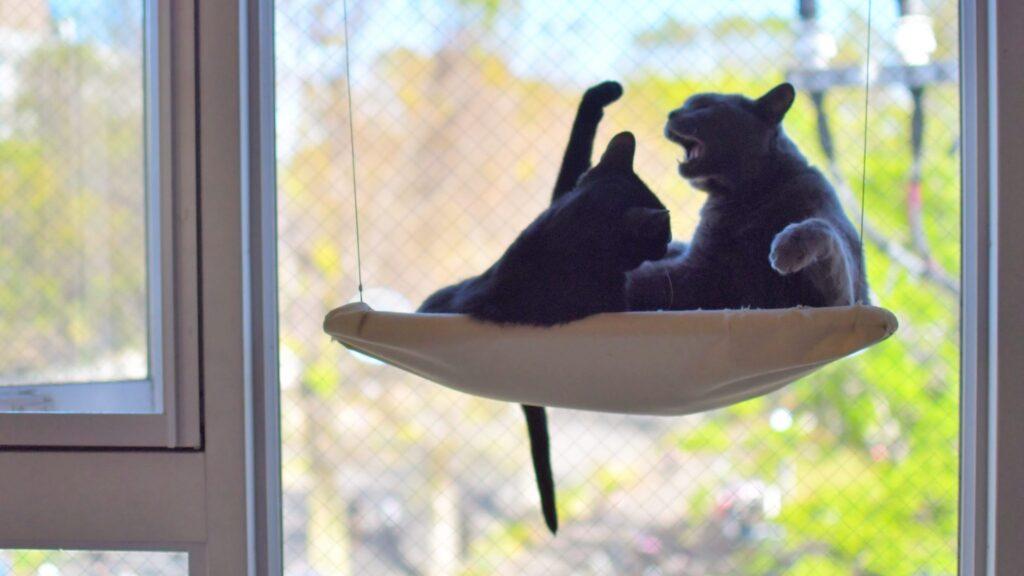保護猫駒猫の猫