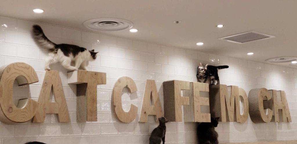 catcafe