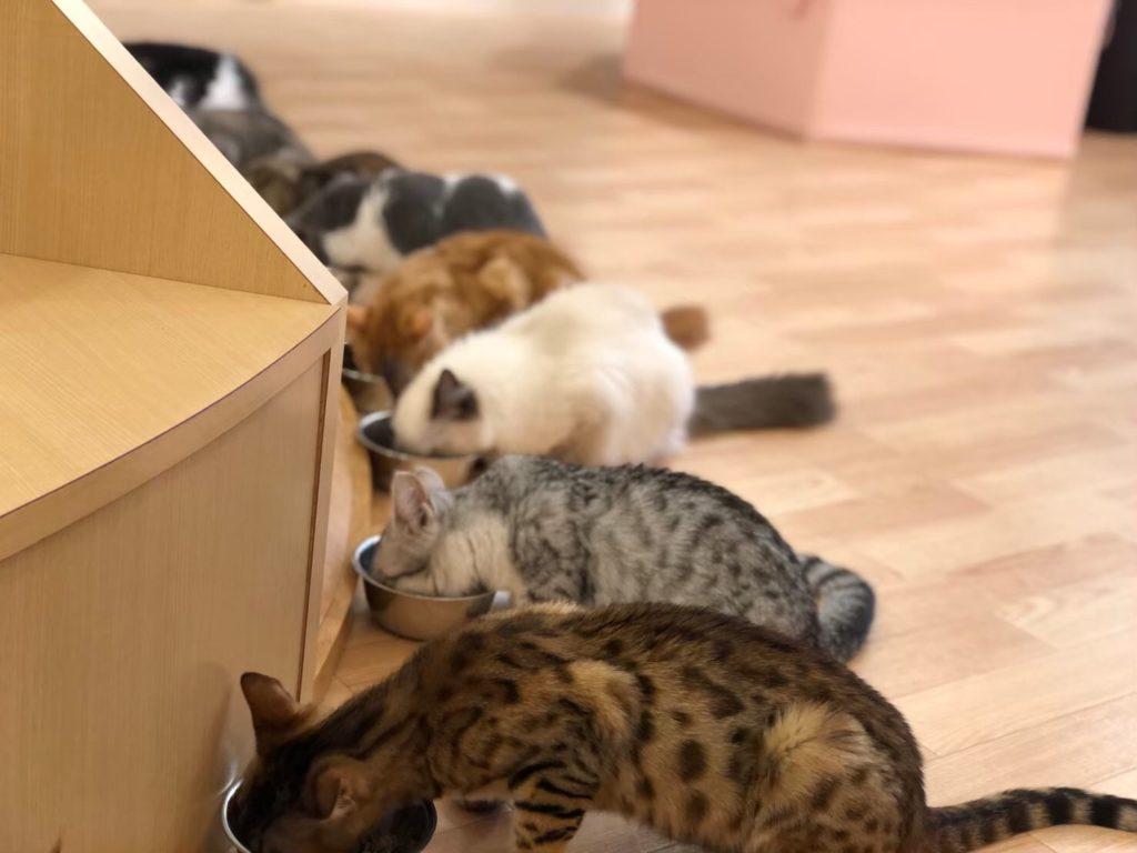 PuchiMarry(ぷちまりー)ラソラ札幌店の猫
