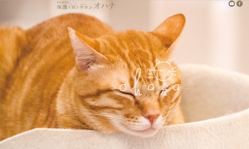 保護猫サロンOhana-オハナのホームページ