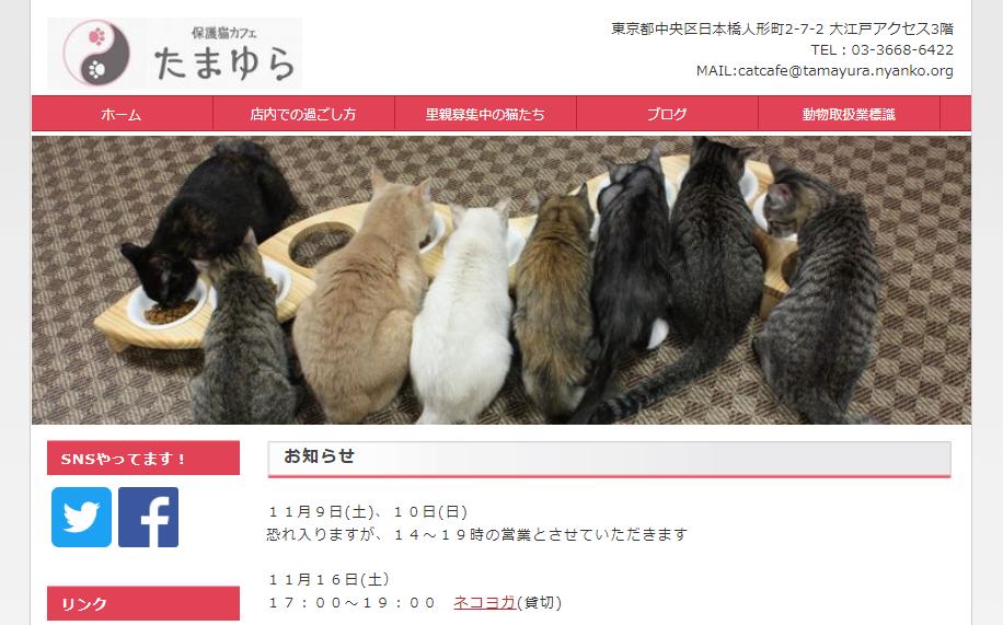 保護猫カフェたまゆらホームページ