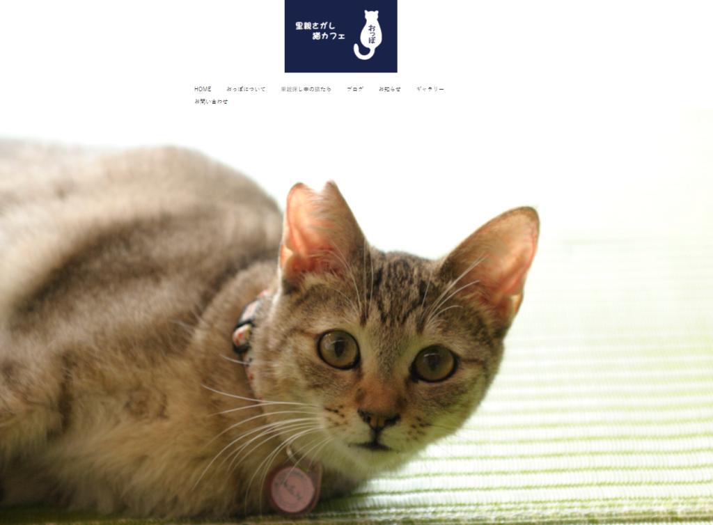 里親探し猫カフェ おっぽホームページ