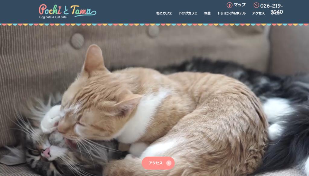 猫カフェ & ドッグカフェ PochiとTamaのホームぺージ