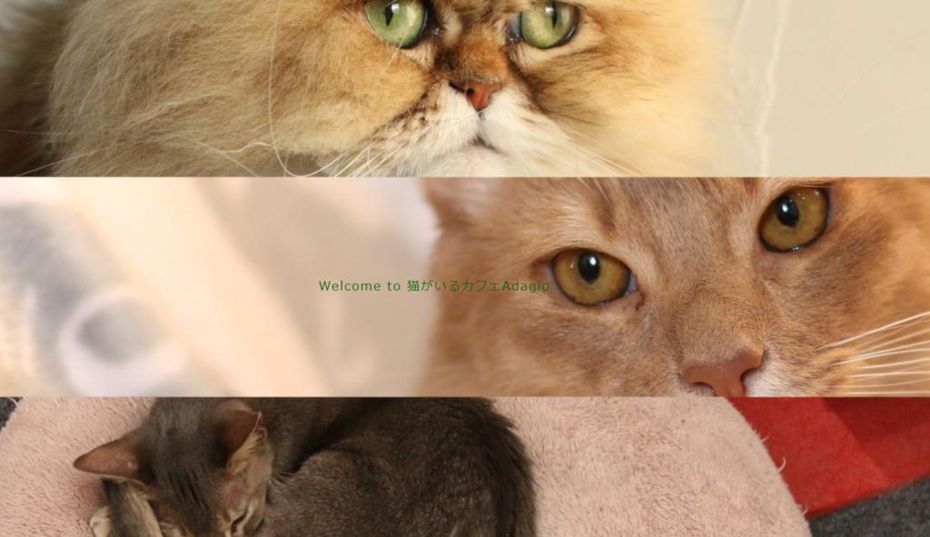 猫カフェAdagioホームページ
