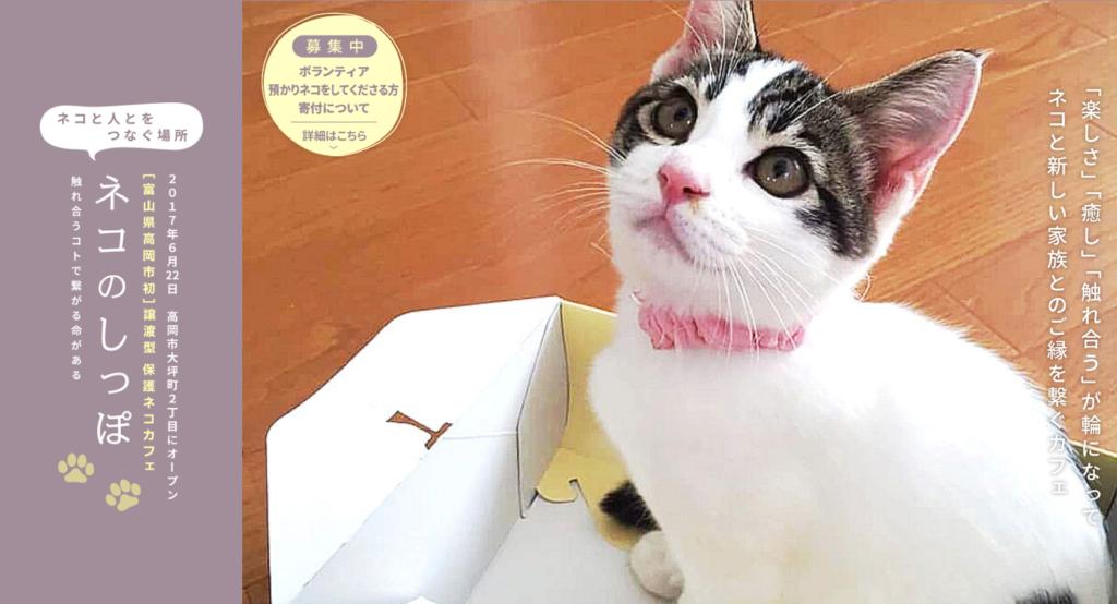 保護猫カフェネコのしっぽホームページ