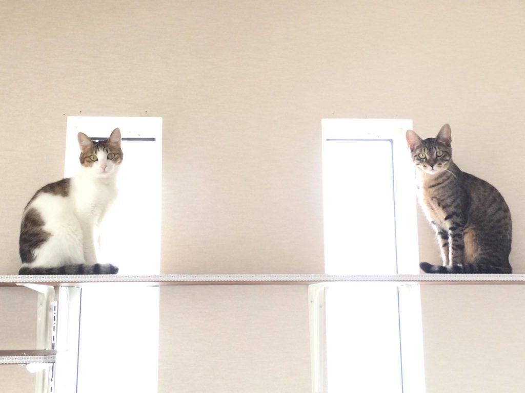 猫カフェ 柚の家の猫