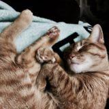日暮里・谷中のおすすめの猫カフェ「宿木カフェ」を紹介