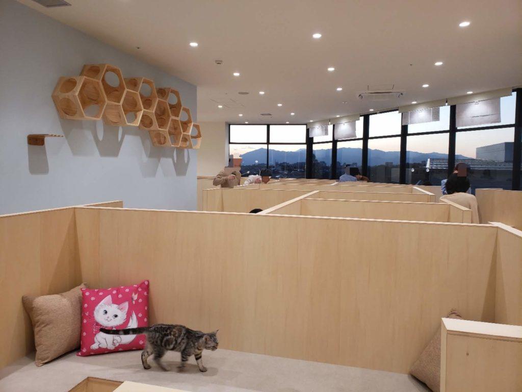 Moff animal cafe 南町田グランベリーパーク店店内