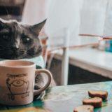 【2021年版】葛西でおすすめの猫カフェ「NECOT COFFEE HOUSE」をご紹介!
