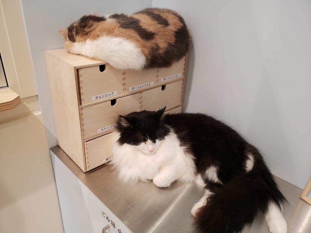 Moff animal cafe 南町田グランベリーパーク店の猫