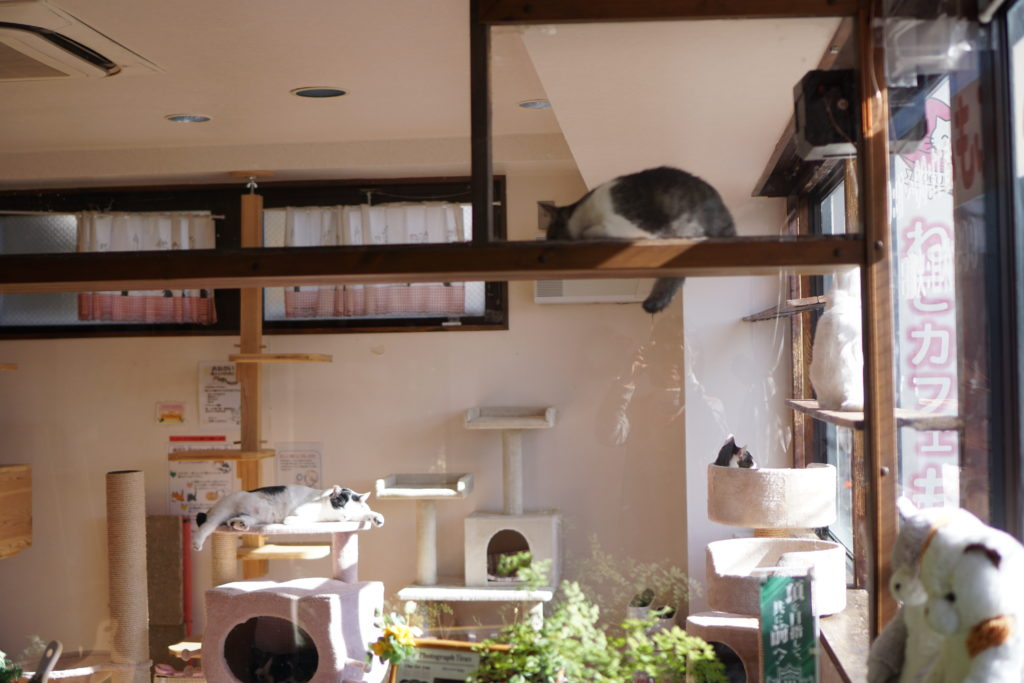 ねこカフェもふもふ店内