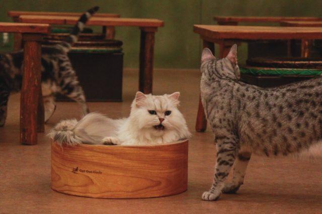てまりのおうち猫