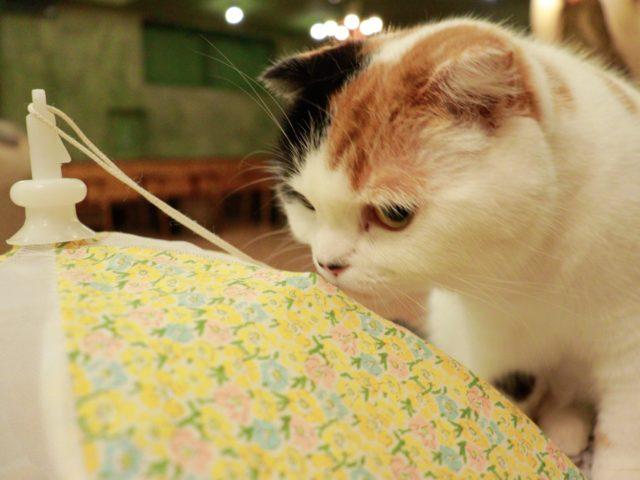 てまりのおうちの猫