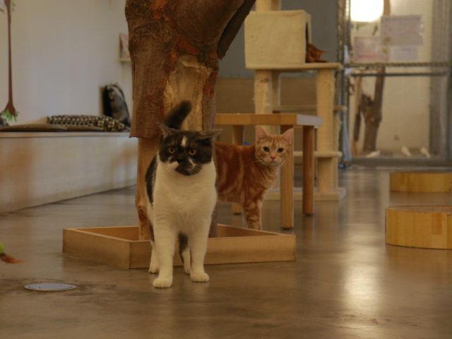Moff animal cafeイーアス高尾店の猫