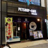 【2021年版】浅草の猫カフェ「空陸家 浅草店」の体験レポート!