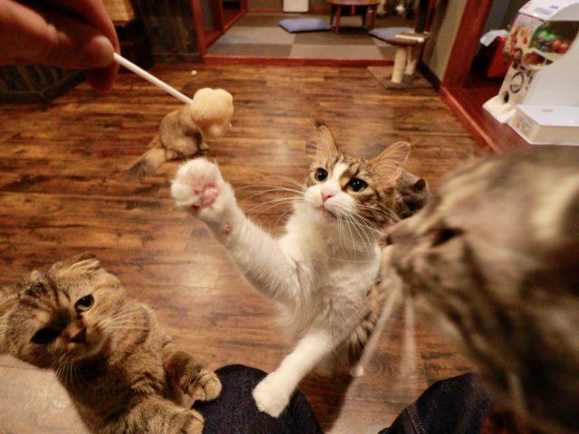 空陸家 浅草店のおやつと猫