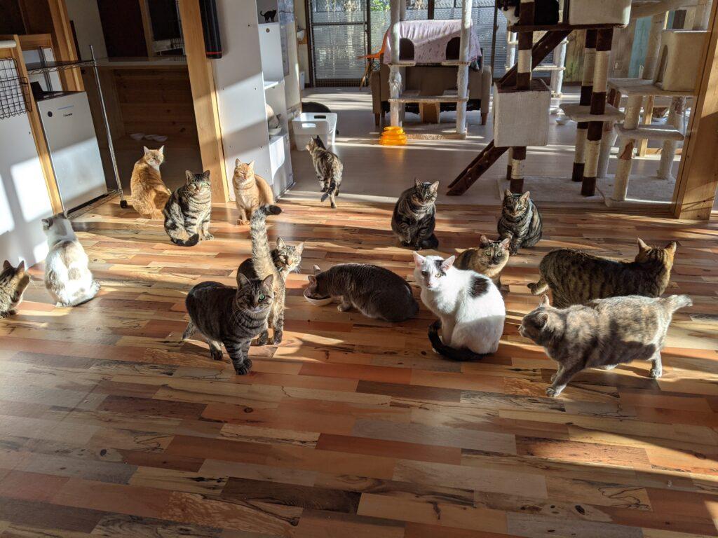 ハワイアン保護猫カフェオハナ店内