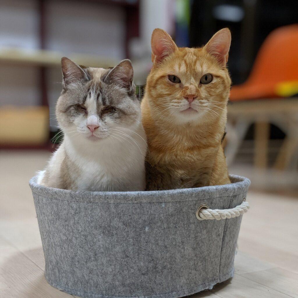ハワイアン保護猫カフェ 'Ohana