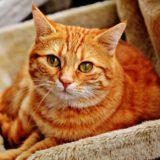 【2021年版】静岡県でおすすめの猫カフェ14選