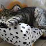 【2021年版】愛媛県でおすすめの猫カフェ4選