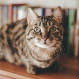 【2021年版】和歌山県でおすすめの猫カフェ8選