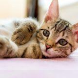 【2021年版】沖縄県でおすすめの猫カフェ12選