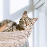 【2021年版】山梨県でおすすめの猫カフェ3選