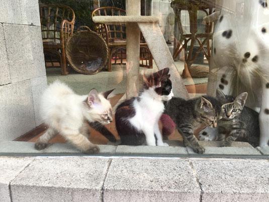 猫カフェ来夢店内