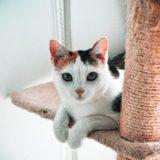 【2021年版】富山県でおすすめの猫カフェ4選【保護猫カフェ】
