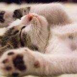 【2021年版】滋賀県でおすすめの猫カフェ2選