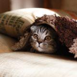 【2021年版】新潟県でおすすめの猫カフェ8選