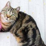 【2021年版】群馬県でおすすめの猫カフェ4選【猫ジェットコースターあり!】