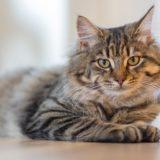【2021年版】香川県でおすすめの猫カフェ2選