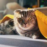 【2021年版】茨城県でおすすめの猫カフェ6選【かわいい猫がたくさん!】