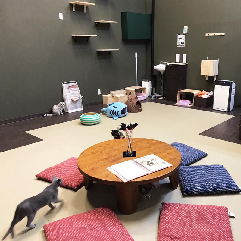 猫喫茶 空陸家の店内