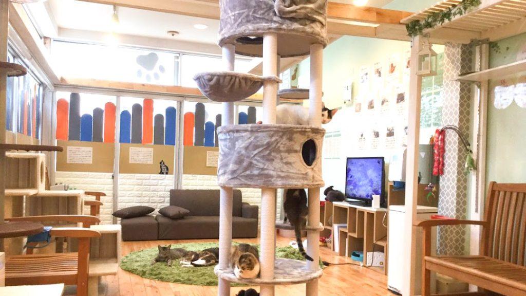 猫カフェにゃんころホームページ