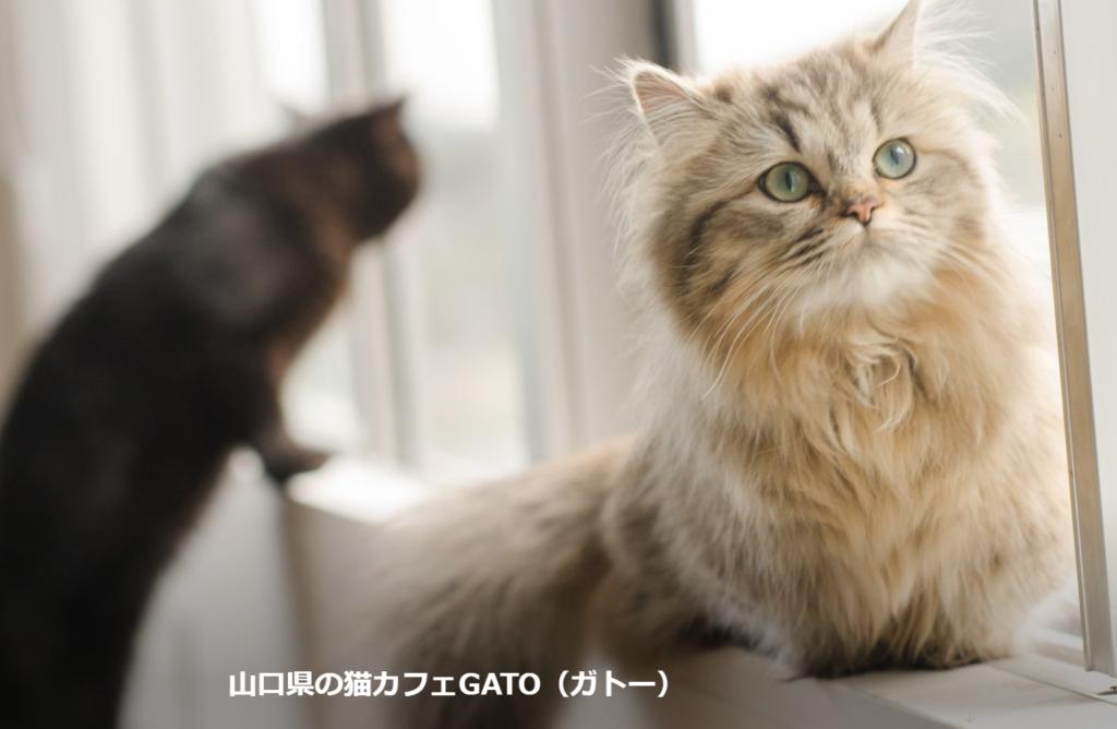 猫カフェGATOホームぺージ