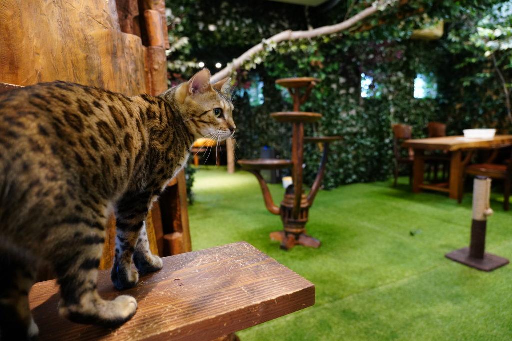 倉敷ヒョウ猫の森(店内)