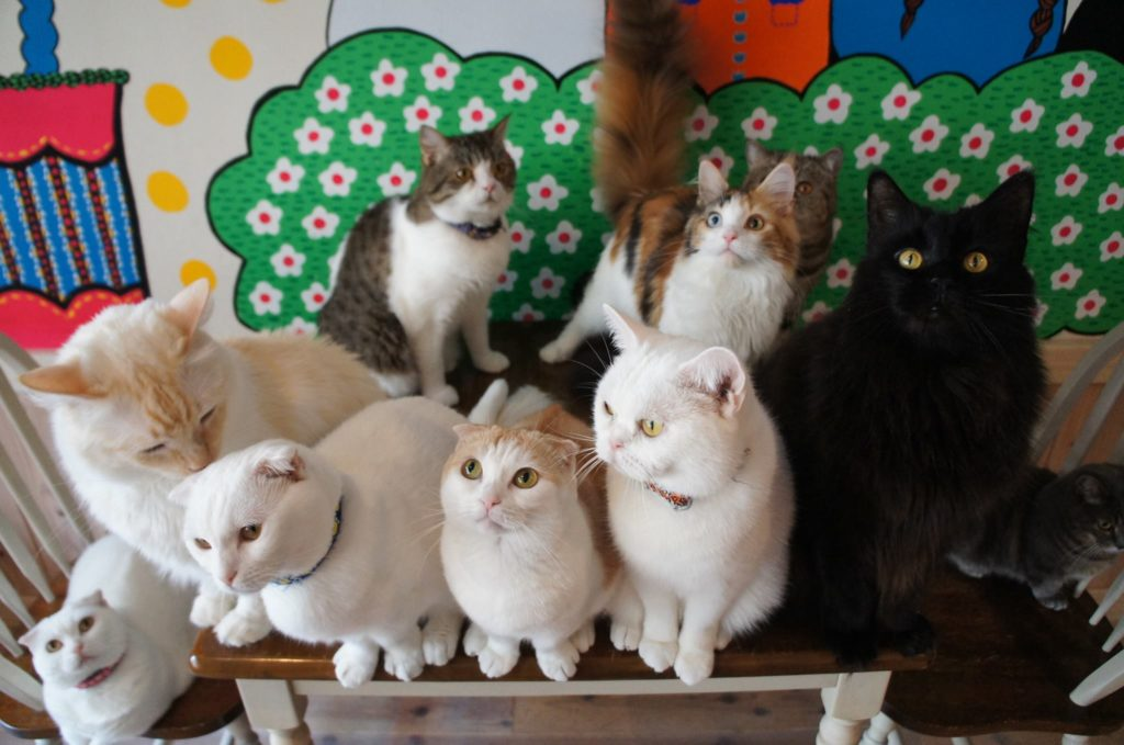 Cat Cafe Kitty Blueの猫