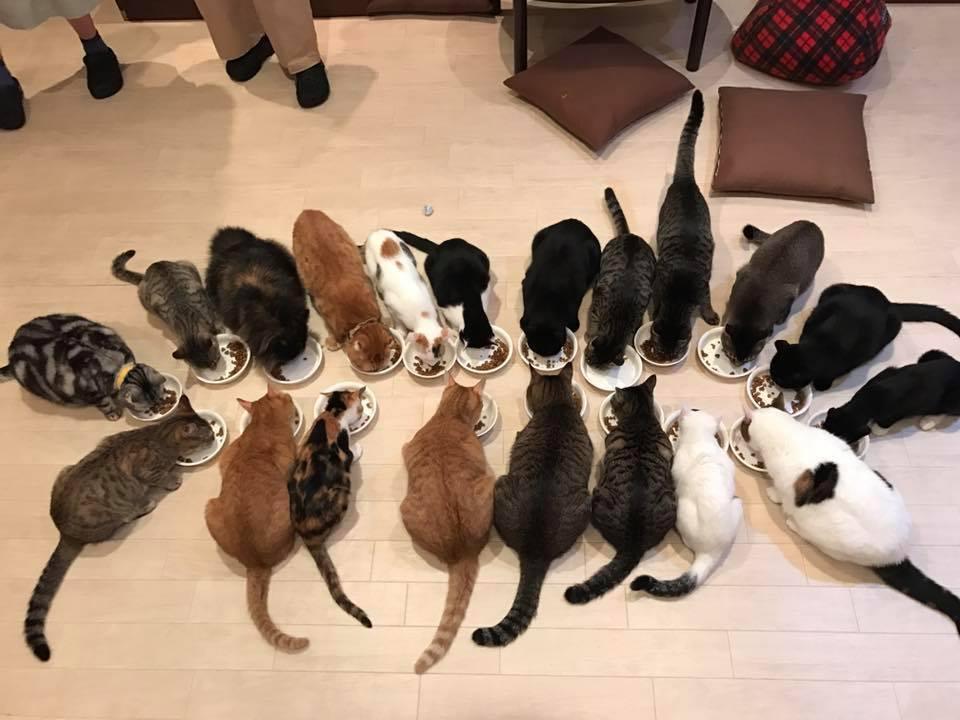 保護猫カフェ和風桶猫喫茶の猫