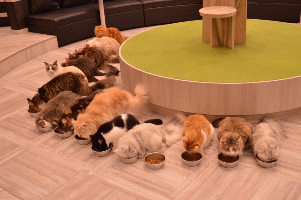 猫カフェモカ アルシェ大宮店ご飯タイム