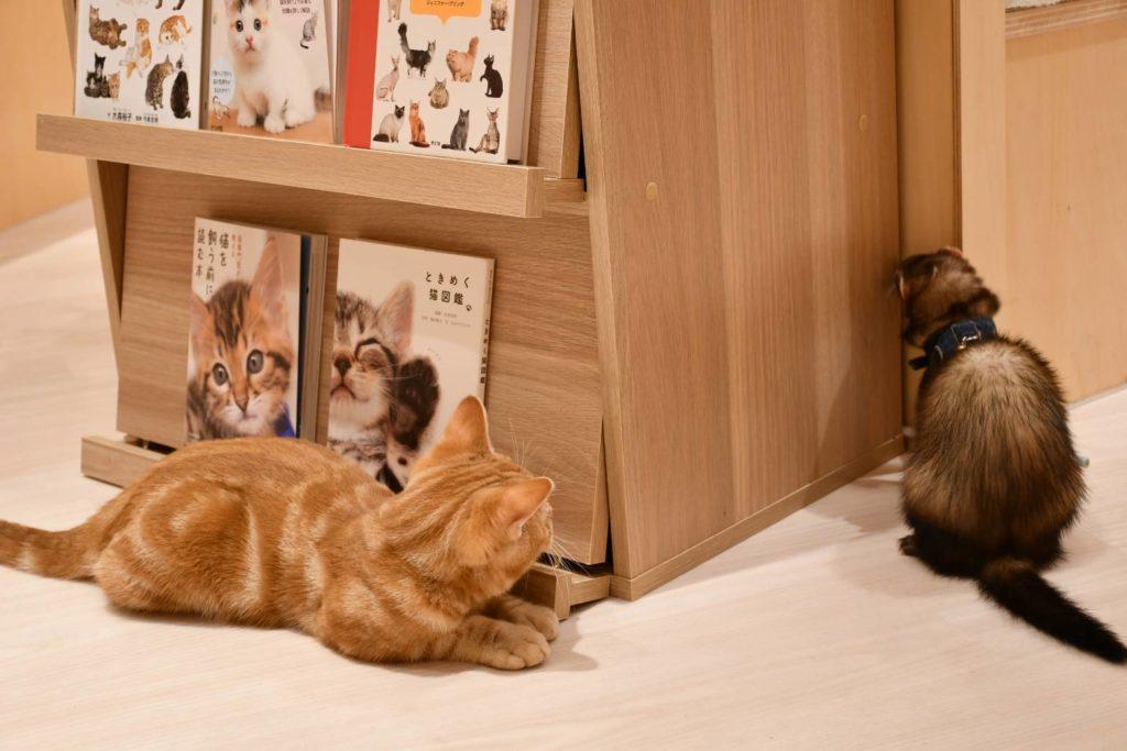 Moff animal cafe COCOSA熊本店の店内