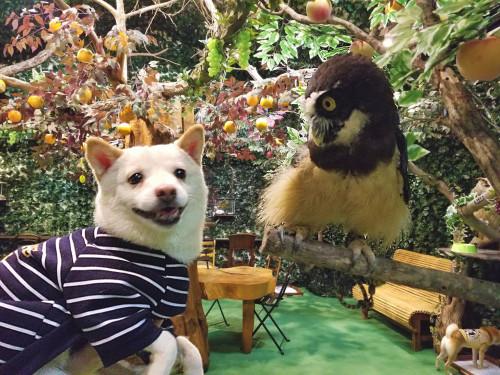 倉敷どうぶつの森の動物
