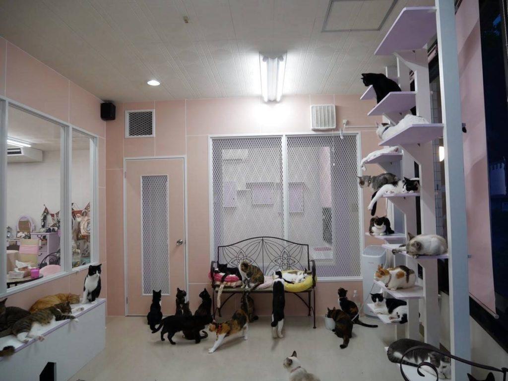 猫の城 Nyangusk(にゃんぐすく)の店内