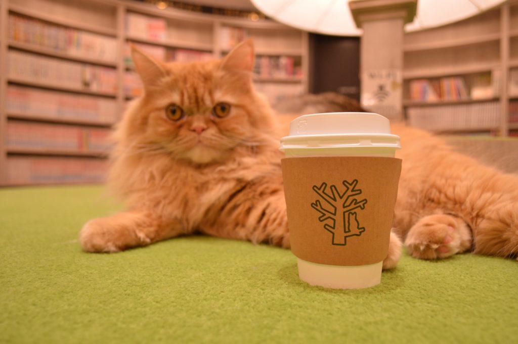 猫カフェモカアルシェ大宮店